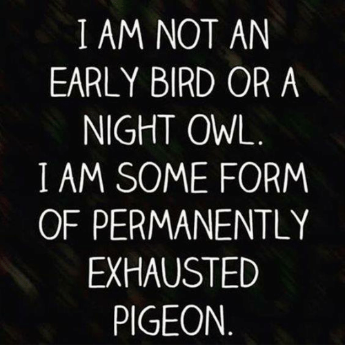 i-am-not-an-early-bird-or-a-night-owl-4729985