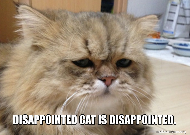 disappointed-cat-is-5b7230